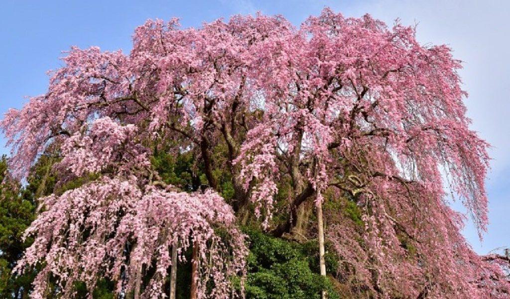 【恋愛ジンクス】福島県の人気の縁結び神社のご紹介