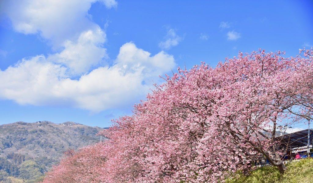 【恋愛ジンクス】静岡県の人気の縁結び神社のご紹介