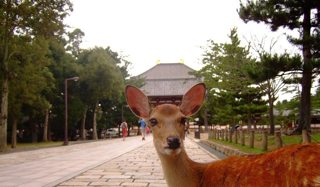 【恋愛ジンクス】奈良県の人気の縁結び神社のご紹介